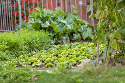 Küche - Garten mit Salat