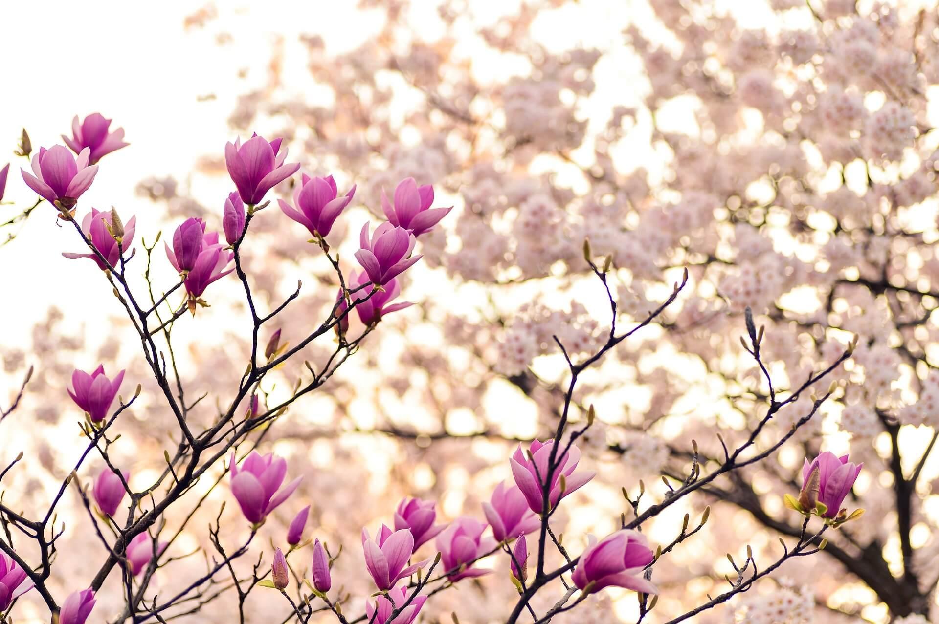 Frühling im Hotel Solaia