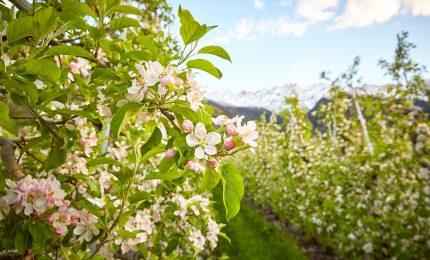 Hotel Solaia – Alpine pasture spring